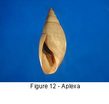 Aplexa
